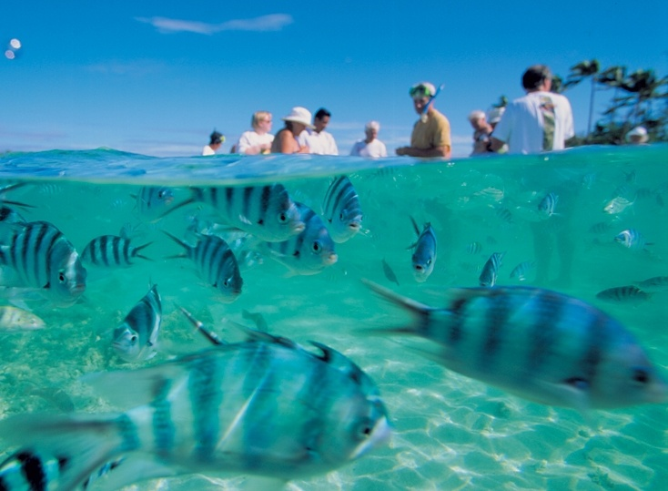 Blue Lagoon Cruises snorkelling #fiji #travel #islands