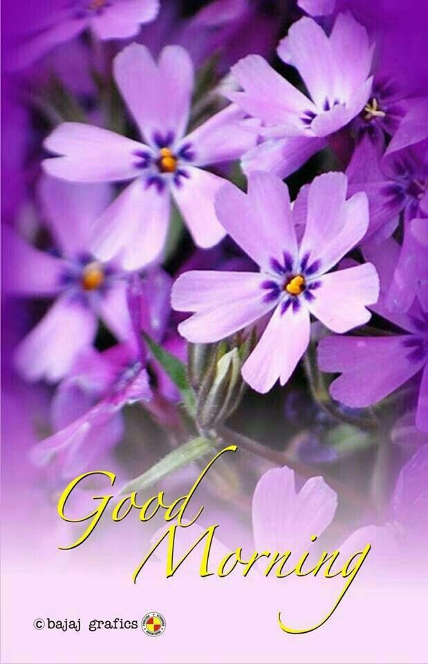 Good morning! Aren't flowers pretty? I love flowers!