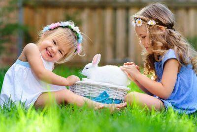 Il coniglio come animale da compagnia è un concetto che può sembrare, ad alcuni, azzardato. Nella nostra cultura, è stato a lungo ritenuto unanimalesoltanto «da reddito» . Invece secondo il «Rapporto Italia» dell'Eurispes, lo ha scelto ben il 3 % d...