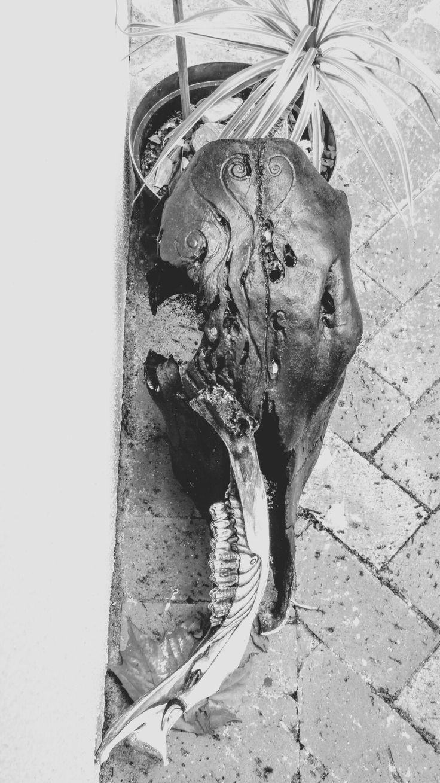 #skull #carving #horse #death #jawbone #paint #black #outside