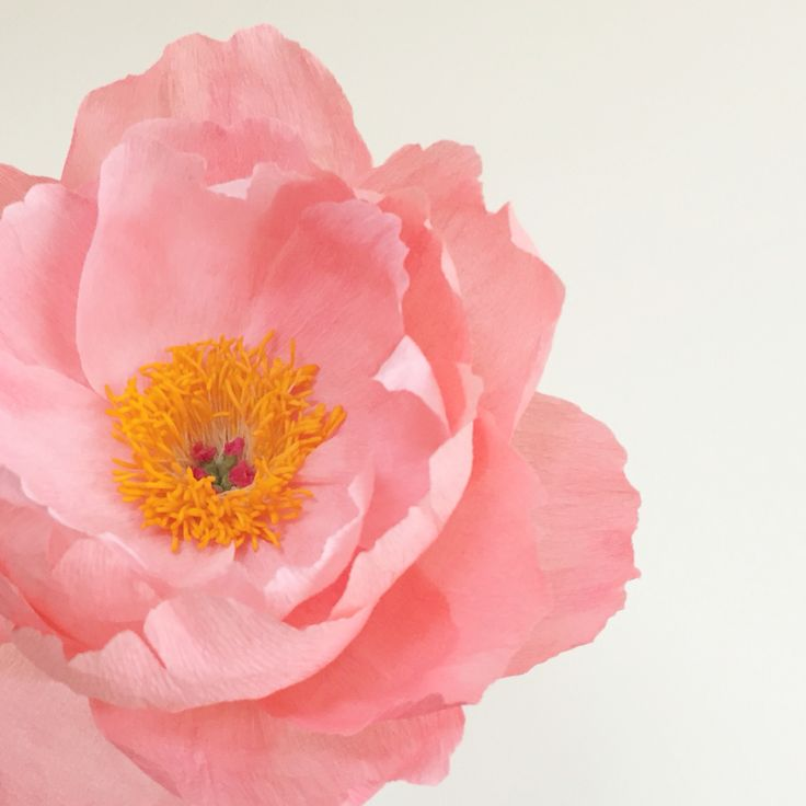 Coral charm peony made of crepe paper handcrafted by Agnes Soo of Flowerfilledlife