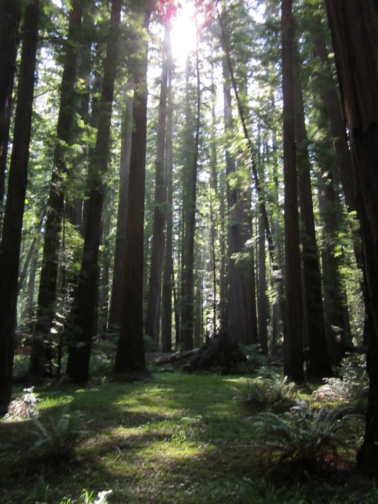 Humboldt Redwoods SP, CA  one of my favorite places