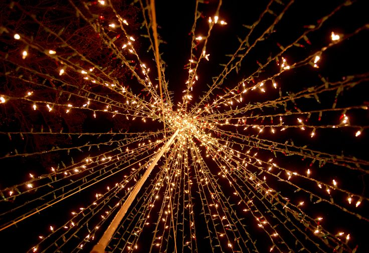 Netted Christmas Lights