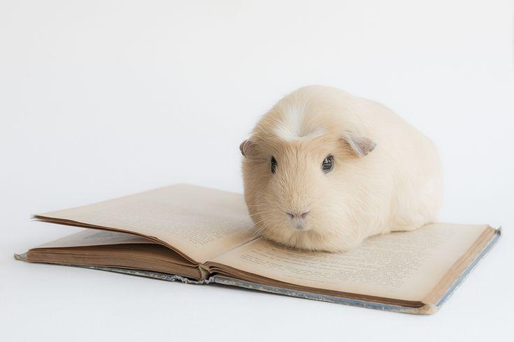 Studying is hard by lieveheersbeestje.deviantart.com on @deviantART