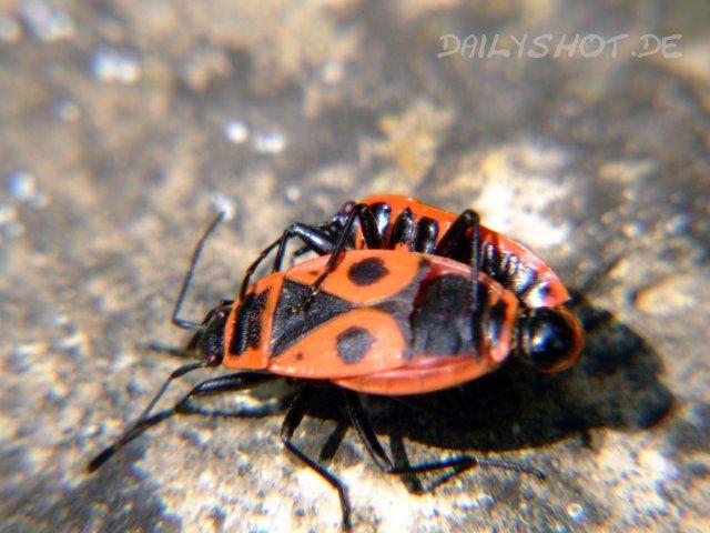 http://www.dailyshot.de/media/blogs/all/dailyshot_20090522.jpg