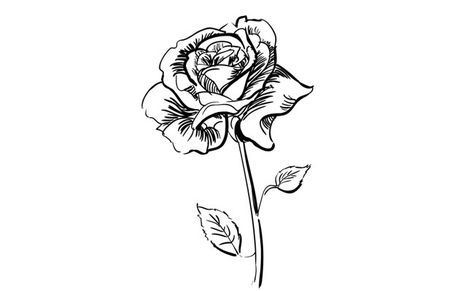 how to draw a realistic rose easy