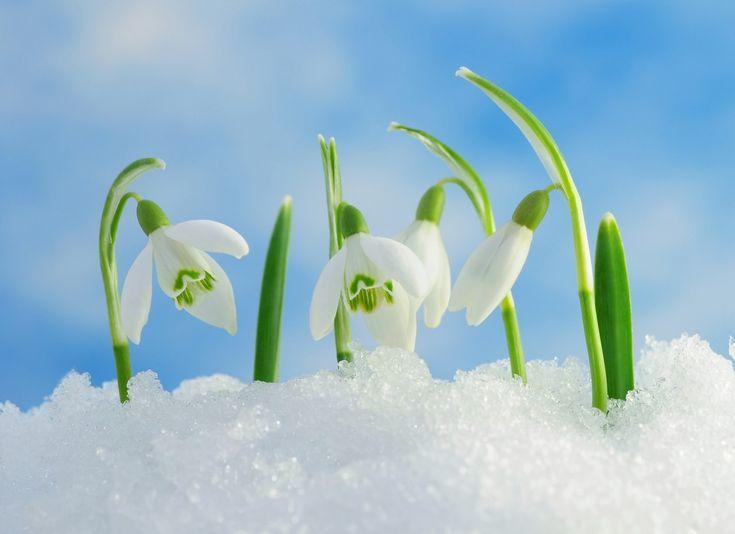 последних картинки про весну красивые для презентации иногда тетиву делают