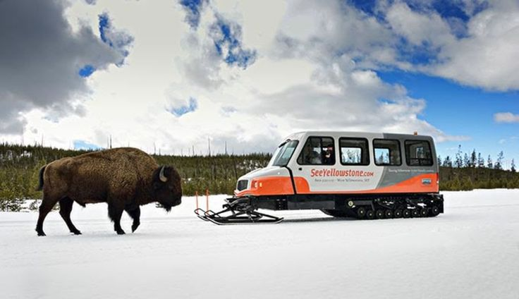Winter Yellowstone Tours on a Snowcoach, Skis, or Snowmobile | My Yellowstone Park