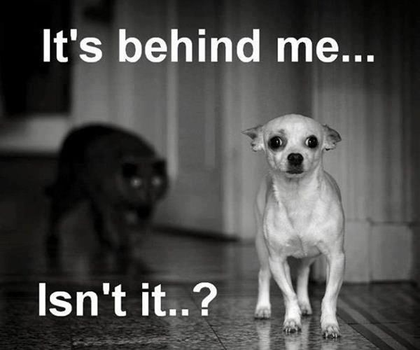 Behind me http://top10dogpictures.com/13-funny-dog-pictures-with-captions.html