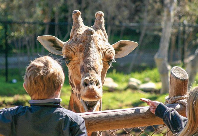 Are Zoos Ethical Zoos In Ohio Gorilla Names Zoo