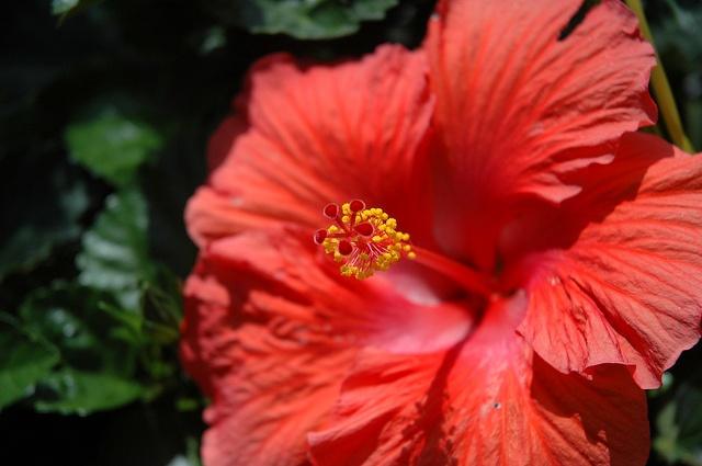 12 Best Wildlife At Daniel Stowe Botanical Garden Images On Pinterest Wildlife Botanical