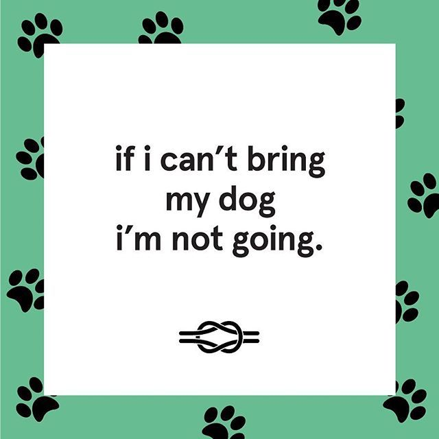 Some days are like... #nodognogo.