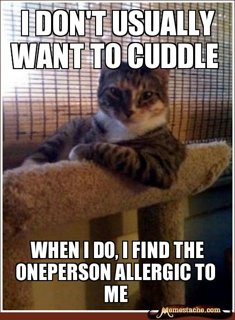 I don't usually want to cuddle / When I do, I find the oneperson allergic to me: Cats, Animals, Funny Stuff, So True, Humor, Interesting Cat, Funnies