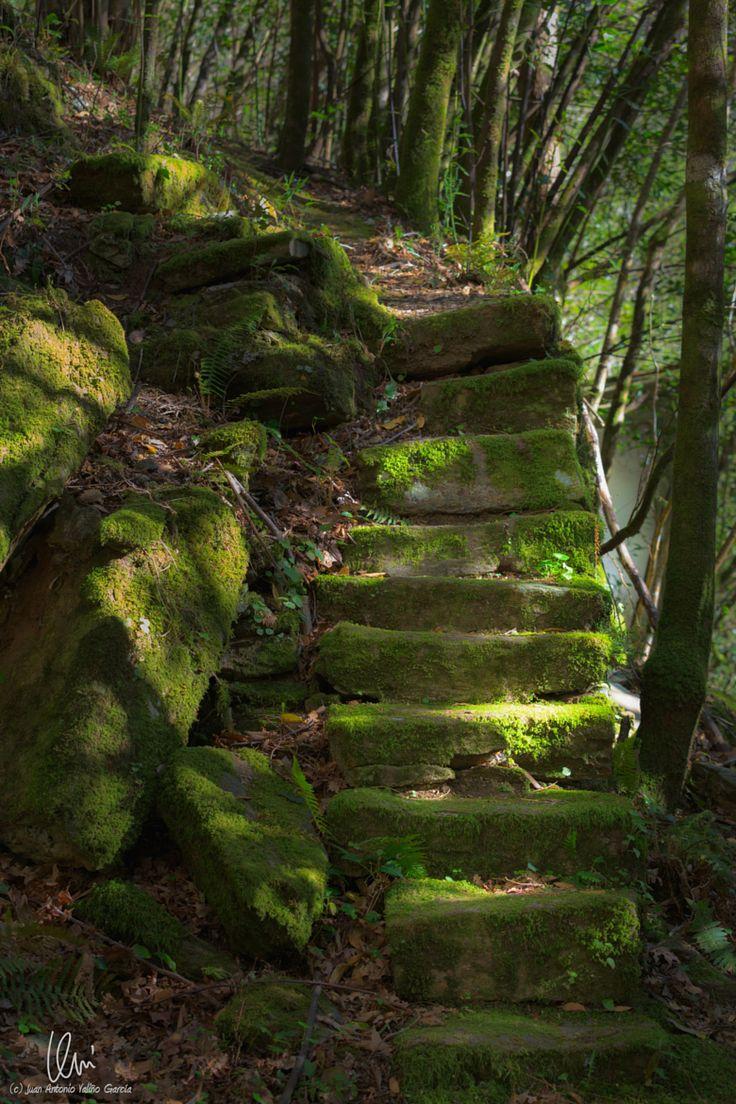 Mystic ancient path by Juan Antonio Valiño García on 500px○ Canon EOS 5D Mark III-f/5.6-1/125s-70mm-iso400, 3840✱5760px-rating:94.2☀ Photographer: Juan Antonio Valiño García, Santiago de Compostela, España