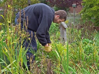 How to Keep Weeds Grass Out of Vegetable Gardens