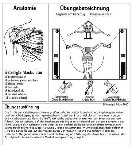 Bildergebnis für kabelzug übungen | Workouts | Workout ...
