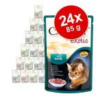Gemengd Voordeelpakket Animonda Carny Exotic 24 x 85 g, met kangoeroe, buffel en struisvogel