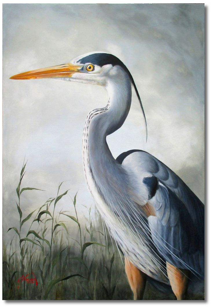 Great Blue Heron Acrylic On 30 Quot X 40 Quot Canvas Artwork By