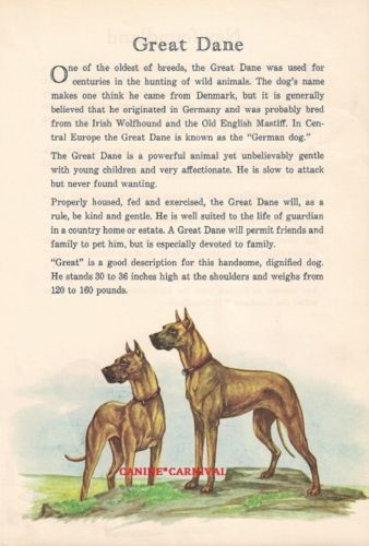 VINTAGE GREAT DANE FAWN DOG WITH STORY Art Print ILLUSTRATION 1950