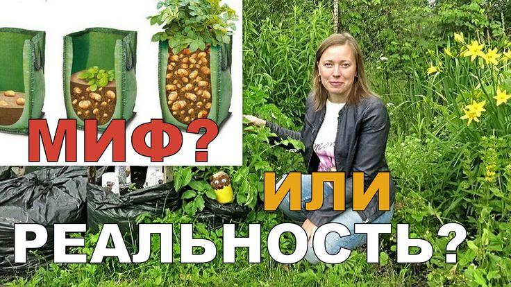 ОКУЧИВАНИЕ картошки В МЕШКАХ // Выращивание картофеля в мешках 3 / Potat...