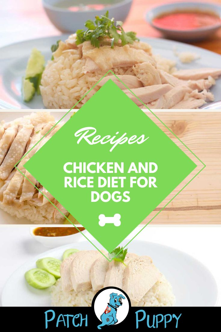 Chicken and rice diet for dogs rice