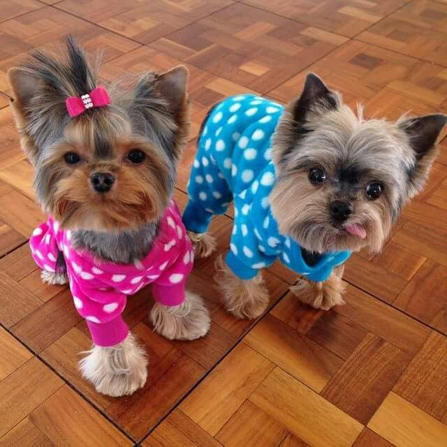 Which way to the pj party?