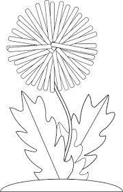 Resultado de imagen para dibujo de la planta de diente de leon para colorear