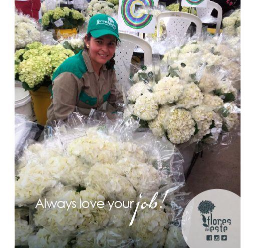 Always love your job!#hydrangeas #flowers #shine #love #homedeco #springflowers