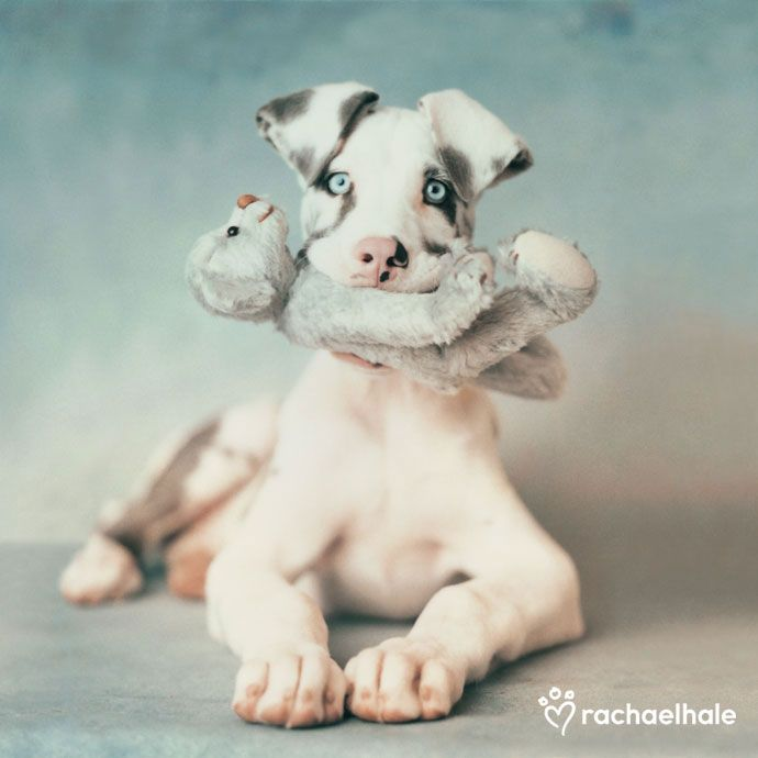 What a cutie! I can't wait for my very own great dane!