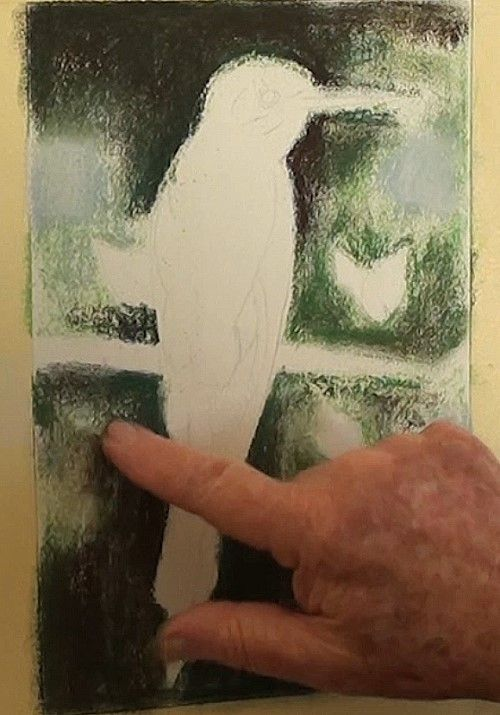 How to Draw a European Bee-Eater in Pastel — Online Art Lessons