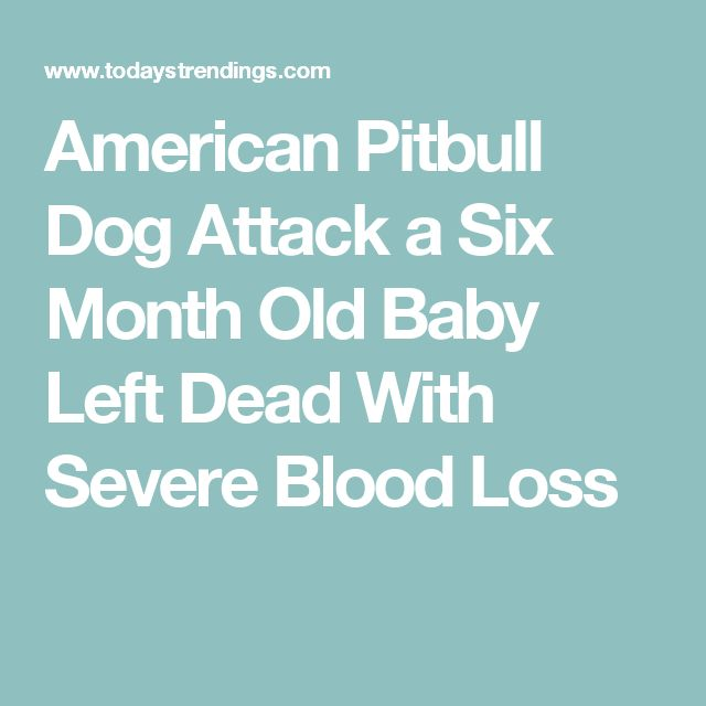 American Pitbull Dog Attack a Six Month Old Baby Left Dead With Severe Blood Loss