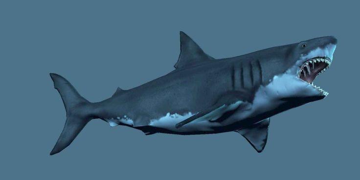 Доисторическая гигантская акула - мегалодон