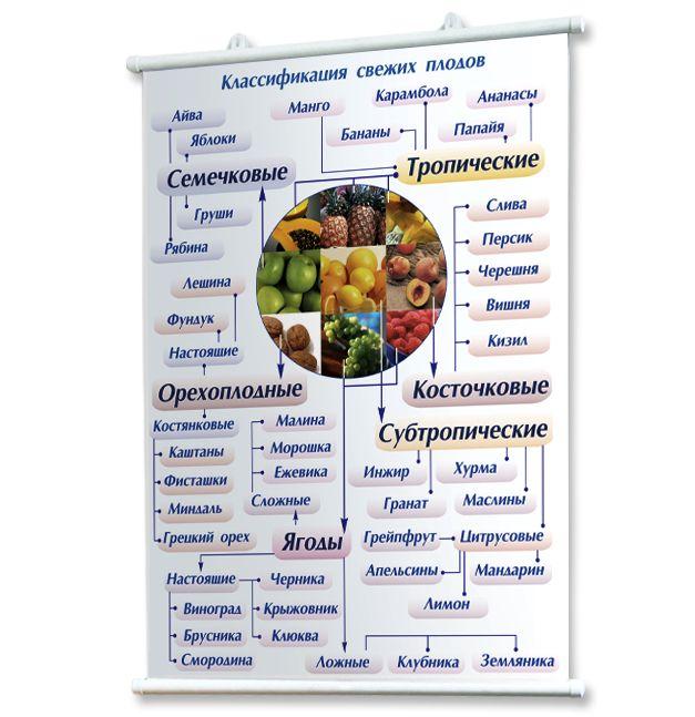 Плакат товароведение продовольственных товаров