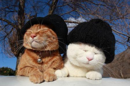 холодно на улице, шапки надевайте