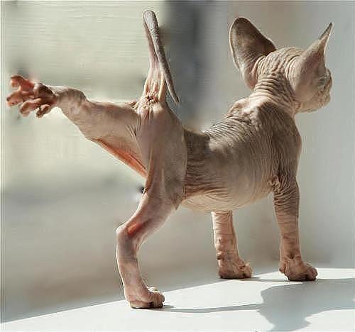кто нарисовал картину котенок на чемодане - Поиск в Google