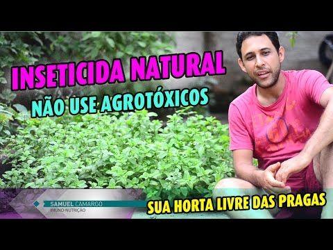 Emater responde - Controle da formiga cortadeira - Programa Rio Grande Rural - YouTube