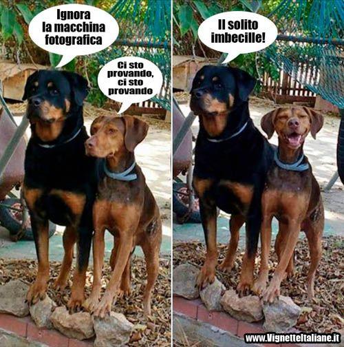 Anche io ho un amico così! :D #immagini #divertenti #cani
