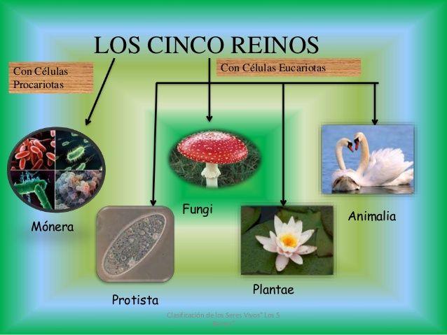 ciencias naturales los cinco reinos - Yahoo Image Search Results