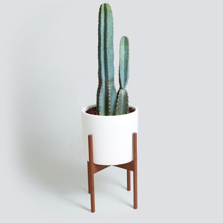 The Case Study Cylinder with Cacti – The Sill