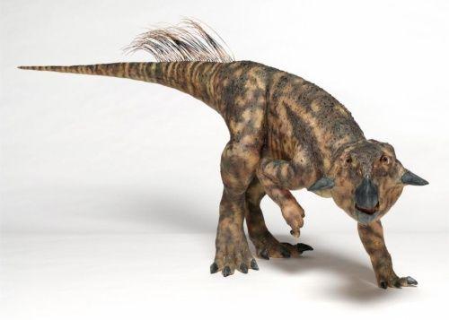 プシッタコサウルス くちばしを持つ小さな恐竜。名前の意味は「オウムトカゲ」。トリケラトプスの仲間で、尾に繊維状の羽毛が生えている。(PHOOTGRAPH BY ©AMNH, C. CHESEK)