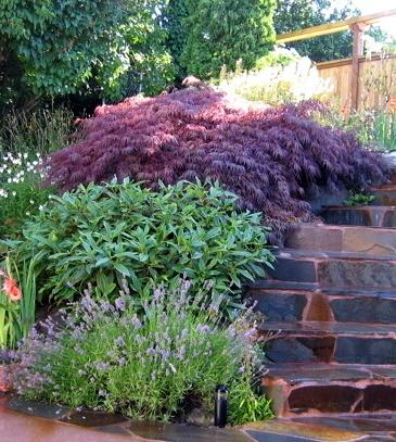 Best Rockery Garden Ideas Images On Pinterest Garden Ideas