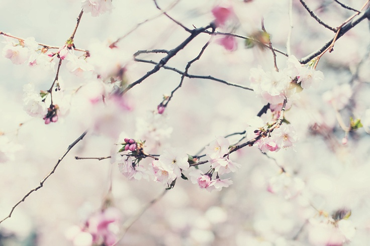 Spring by By hagelstorm ♥ on flickr
