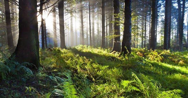 18 λόγοι που τα δάση είναι ανεκτίμητα!