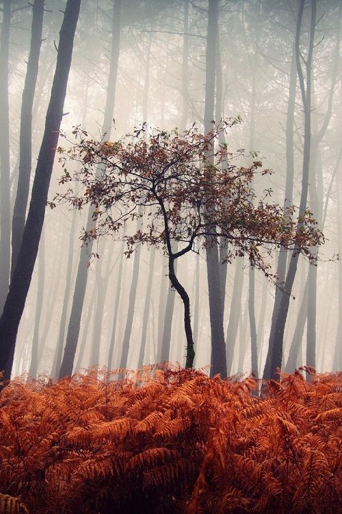 Oasis by Guillermo Carballa  In Galicia (Spain) there are some ferns in autumn turn dark orange and die in winter to re-sprout...