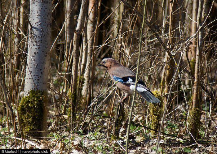 Мимикрия в живой природе. Теория эволюции и естественный отбор.  #природа #птицы #птички #фотография #фотографии #животные #наука #интересное #факт #факты #сойка #сойки