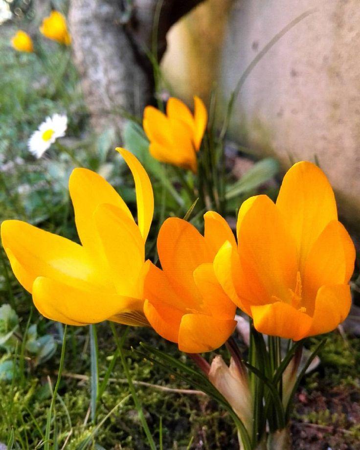 Au pays de fleurs, plus on est petit, plus on embaume (Alphonse Daudet)