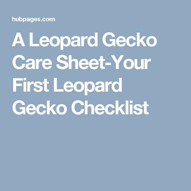 A Leopard Gecko Care Sheet-Your First Leopard Gecko Checklist