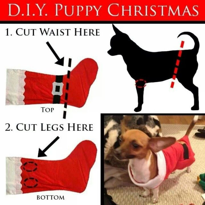 Quick dog Christmas outfit :)