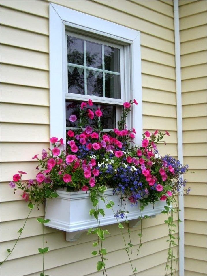 30 Best Flowers Plant for Window Boxes 2019 Home Outdoor
