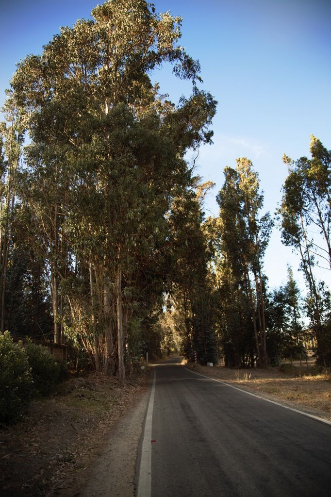 On the winding, country road into the eucalyptus grove.